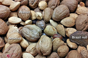 Common-nuts.png